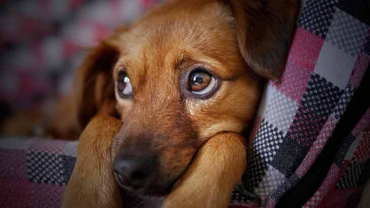 perros sensibles proteger energias