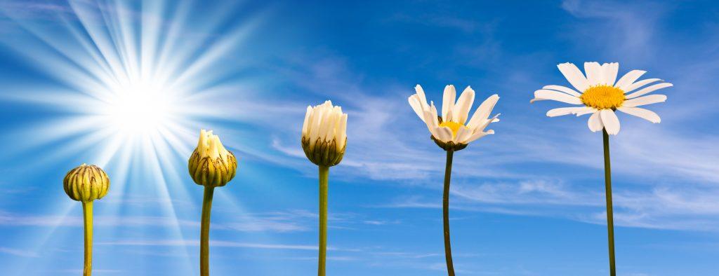 camino espiritual evolucion cambio