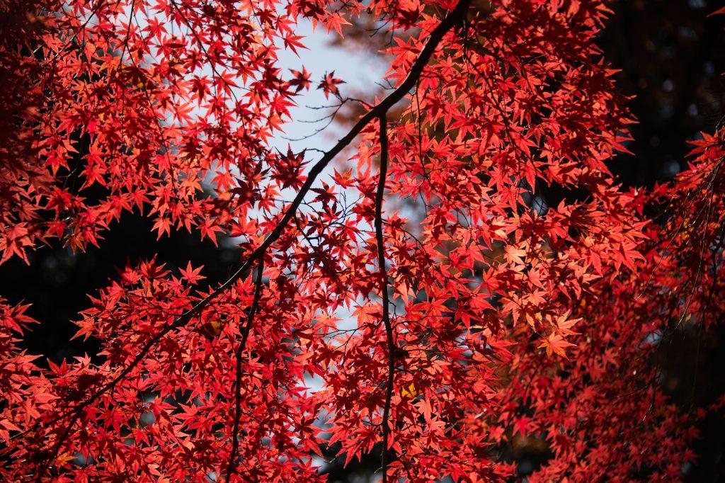 rojo anclaje chakra naturaleza
