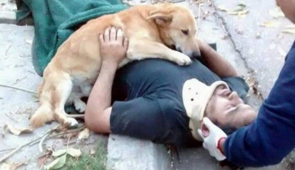 Les chiens sont nos gurus de l'amour inconditionnel