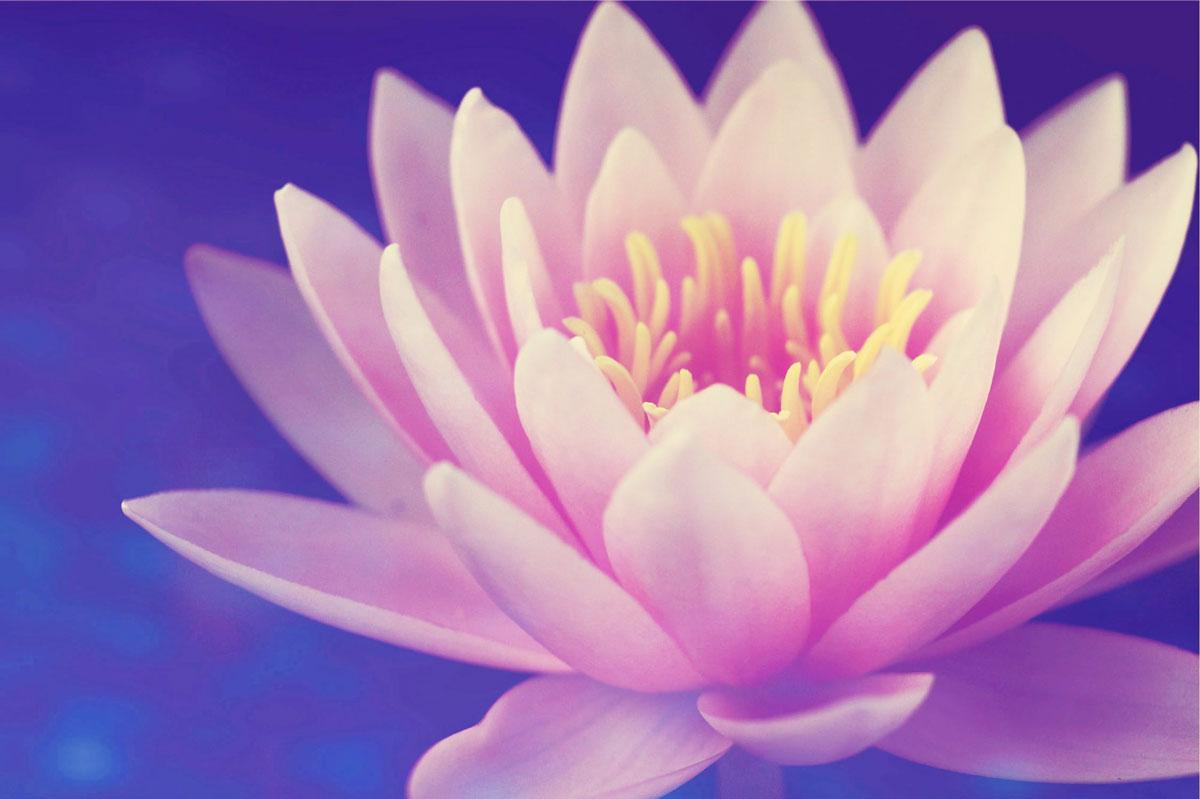 la fleur de lotus est un des symboles hindouiste