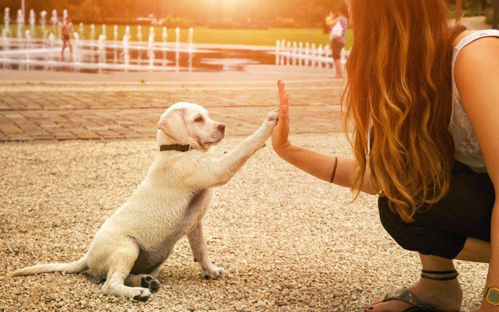 les chiens et l'amour inconditionnel