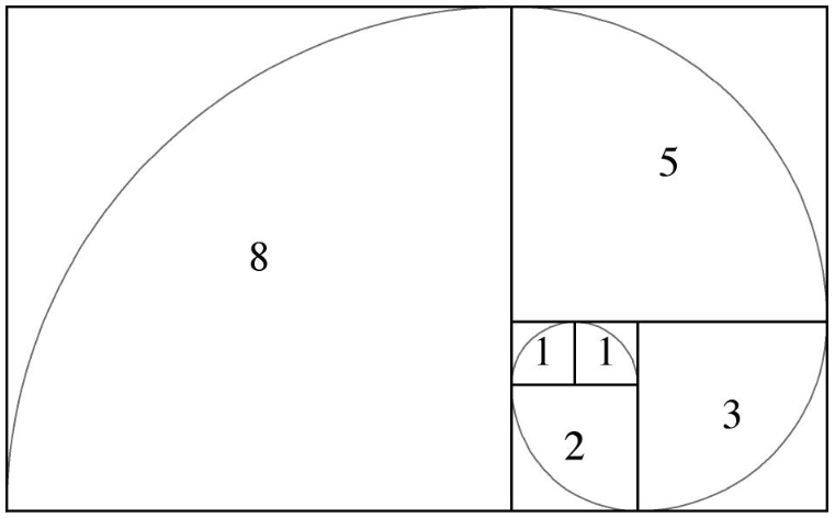 on retrouve la spirale de fibonacci un peu partout dans la nature