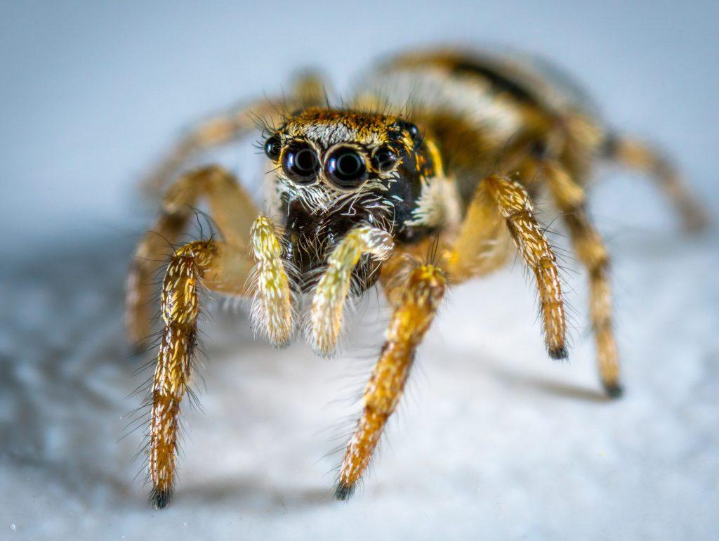 araignée animal totem