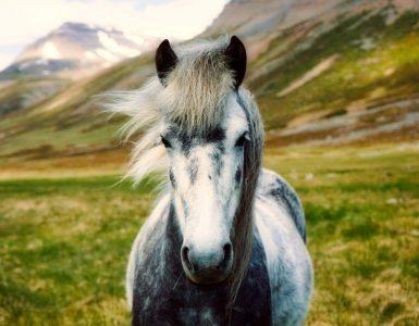animal spirituel cheval